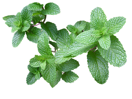 Natural Fresh Mint Aroma